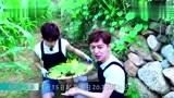 黄磊何炅大华蘑菇屋生活三个月何炅带着大华去玉米地摘玉米!