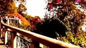 广州白云山:没有你想象中的高,却比你想象中美