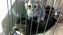 会按摩的猫咪+——看了笑道肚子痛