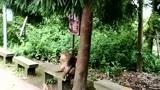 峨眉山的这些猴子真不是一般的坏,这次遇到对手了,你怂什么啊!