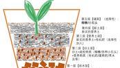 【阳台种菜】我的懒人配土方法+你知道葱的根有多长吗?!