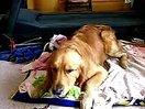 吃大白菜的狗。大白菜官网就是www.dabaicai.com