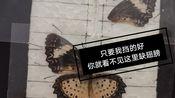 翻车!白带锯蛱蝶标本制作