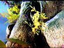 leafy sea dragon from Monterey bay aquarium