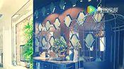 玻美雅艺术玻璃背景墙招商加盟