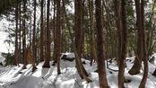 日本奥日光的冬季深山