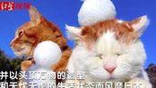 """日本网红猫咪""""猫叔""""shironeko去世"""