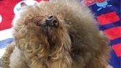 Peacheese Vlog.1 一名潮汕靓仔的vlog 撸狗time 潮汕美食 打呼噜的dog 2020年 新年快乐