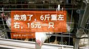 潍坊临朐地区卖鸡了,鸡比菜便宜。