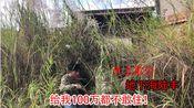 广东汕尾深山发现一间四合院,越看越不对劲,给你100万敢住吗?