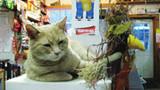 """中国宠物报道之美国""""猫咪市长""""被狗袭击"""