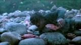 最新电影:黄渤自导自演《一出好戏》,我的彩票我的神,我要去兑奖!