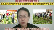 第65集 水果玉米和糯玉米高产技术专家指导福建泉州一农业合作社如何种植水果玉米才能高产
