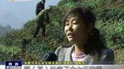 2016-12-15 陕西新闻联播 安康汉滨区:退耕还林建园区 为贫困户打造稳定持久产业