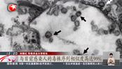 最新突破!华农:从穿山甲中分离出的毒株与新冠毒株相似度达99%