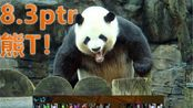 魔兽8.3ptr单虚空回响熊T四木桩12w,熊的力量→_→