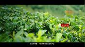 湖北天池山景区宣传片