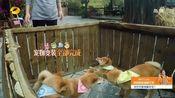 向往的生活3之先导片 黄磊何炅智斗节目组 彭昱畅上演喂狗大战