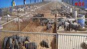 重磅!两部委发文:年出栏5000头以下猪场无需办理环评审批