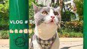 vlog.06日常/喵log「今天是一只咸鱼,和两只猫宅在家里」