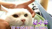 警惕老年猫常见病:如何判断猫咪是否得甲亢及甲亢的治疗方法和预防
