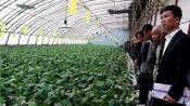 德州市临邑县基层农技推广补助项目技术指导员、示范主体寿光考察学习团wmv好.。