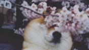 [声控/彩虹六号]Katja直播录像 21/4 Katja & Teo & Friends 订阅捐赠潮~