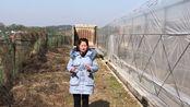 专门搞大棚育苗为主,2亩地一次性出100万棵,一年流水24万