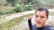 农村小伙去50公里大山寻找流动活水鱼,一斤卖25块钱,做鱼生首选