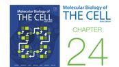 《细胞的分子生物学》第24章 天然免疫与适应性免疫 配套视频(字幕重制版)