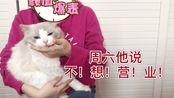 【布偶猫】我们猫舍的定级和定价标准(上篇)CFA到底规定了布偶猫什么是失格,什么是扣分?