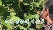VLOG1 在外婆家过一天 乡下的秋天 土灶铁锅豇豆肉丁饭 在外婆菜园子摘菜