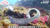 和歌山珊瑚礁大量白化 惨白如尸骨!