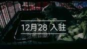 花枝鼠 2个月大小的小灰灰,第一次录制视频 就把今天作为它生日吧 12.28