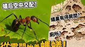 【从零开始养】蚂蚁!蚁巢有厕所、停尸间?蚁后交配?【许伯简芝】|搬运