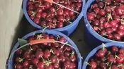 土生土长的大连大樱桃,质量可以秒杀进口车厘子