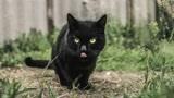 老人常说:千万不要让黑猫靠近去世的亲人,是有科学依据的!