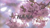 【原创音乐】HANA - Namiki(feat.Arcohyp)