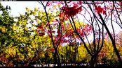 理查德·克莱德曼钢琴曲《秋天的落叶》