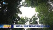 陕西汉中:首次发现彩鹮自然繁殖 孵出4只幼崽