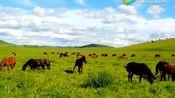 马头琴《成吉思汗的传说》琴声悠扬思念故乡