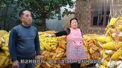 农村夫妻俩承包土地种粮食,一年能挣多少钱?