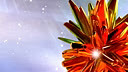 天然琥珀www.s-a.com.cn