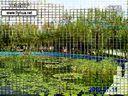 视频:  辽宁  开原植物园