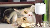 【D梦】为了让猫咪多喝水,又买了小佩饮水机3代,开箱对比2代