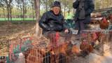 山东济宁农村集市,自家散养的土鸡卖多少钱一斤?这价格是真便宜