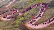 见识一下武山一中学生,徒步老君山,真是一道靓丽的风景线!