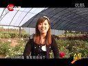 邢台汉牡丹自驾游2.