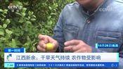 [第一时间]江西新余:干旱天气持续 农作物受影响