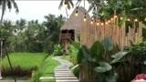 欢迎来到本期Vlog,带你探索巴厘岛的野趣世界